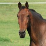 Krmivá pre kone